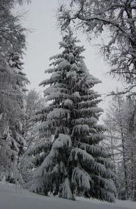 Juletre snø